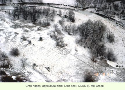 Crop ridges, agricultural field, Litka site (13OB31), Mill Creek