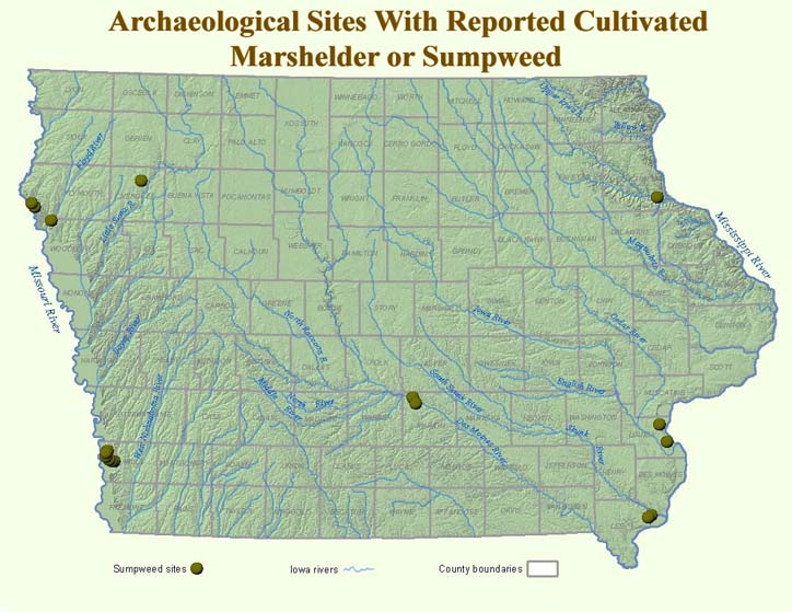 Map of Iowa with olive dots that indicate prehistoric sites known to have cultivated sumpweed