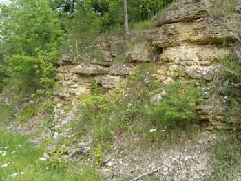 Figure 2. Silurian aged bedrock outcrop in Jackson County