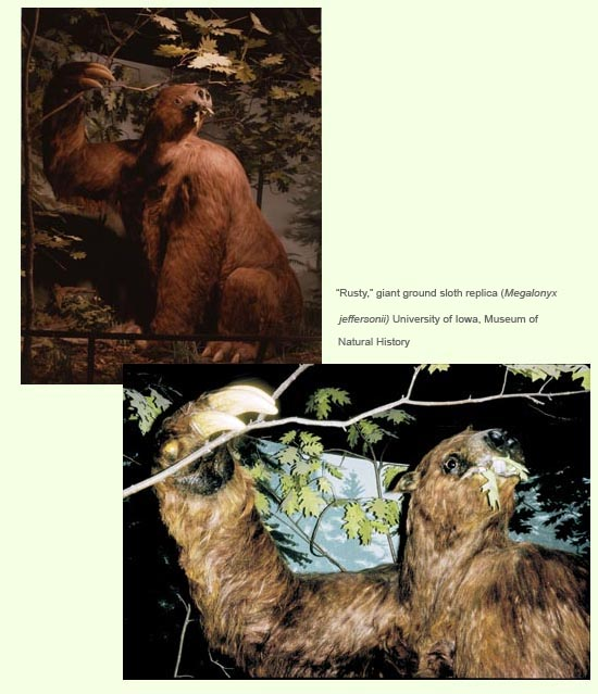 Images of a recreation of a sloth