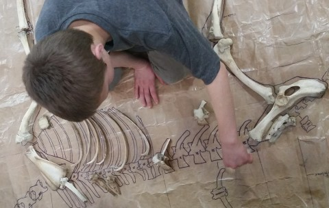 Student organizing deer bone